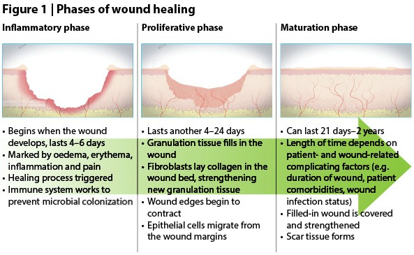 Stalled wound and wound healing - A brief overview